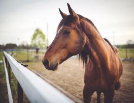 Un accompagnement financier pour les centres équestres – Lettre d'information Covid-19 #3